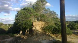 La Posada De La Hormiguita, Homestays  La Pedrera - big - 14