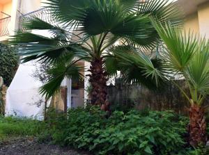 ArtRoom_Giardino in Noto, Ferienwohnungen  Noto - big - 50