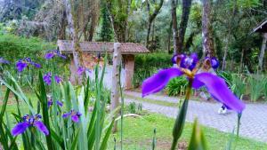 Chales Vila Bracsak, Отели типа «постель и завтрак»  Кампус-ду-Жордау - big - 9