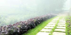 Misty Mountain Plantation Resort, Hotels  Pīrmed - big - 4