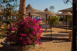 Private Apartments in Nubia Aqua Beach Resort, Appartamenti  Hurghada - big - 15