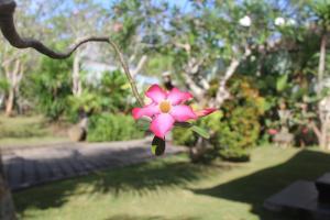 obrázek - El Homestay Bali