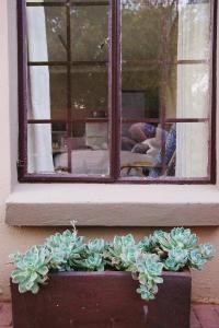 Grassy Guesthouse, Vendégházak  Bloemfontein - big - 13