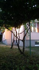 Lozitsa Guest House
