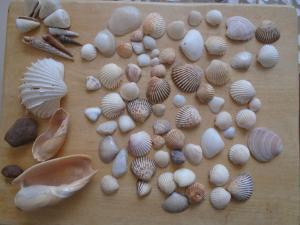 Seashell Garden House