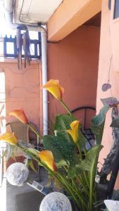 Residencial Viviana, Guest houses  Coronel - big - 33