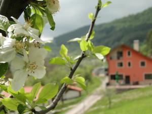 Hotel Garvanec, Загородные дома  Druzhevo - big - 1