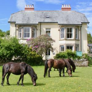 Dartmoor House B & B