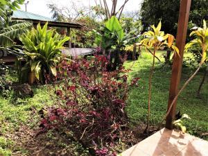 Hostal Marari, Guest houses  Hanga Roa - big - 10