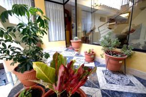 Posada del Colibri, Appartamenti  Cuzco - big - 7
