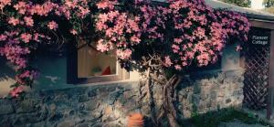 obrázek - Tekapo 1929 - Pioneer Cottage