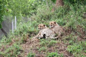Vuyani Safari Lodge