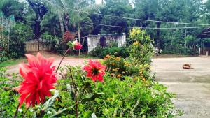 Namma Chikmagaluru NC-GSH, Проживание в семье  Attigundi - big - 48