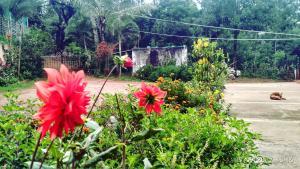 Namma Chikmagaluru NC-GSH, Проживание в семье  Attigundi - big - 51