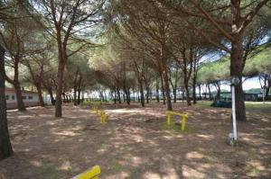 Camping Sant'Albinia, Campsites  San Vincenzo - big - 3