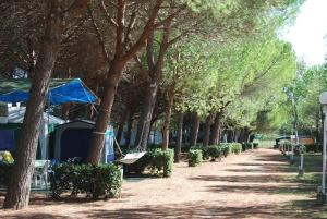 Camping Sant'Albinia, Campsites  San Vincenzo - big - 6