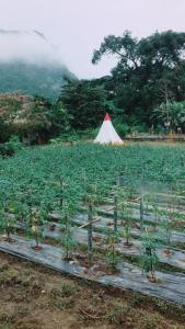 Chiang Dao Story Camp, Vendégházak  Csiangdau - big - 22