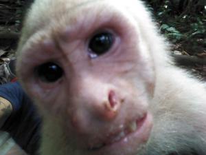 Capuchin Monkey Foundation