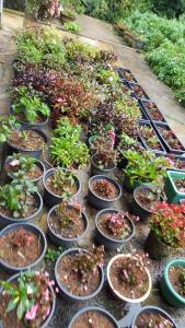 Duniya Flora & Holiday Home, Privatzimmer  Nuwara Eliya - big - 14