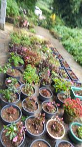 Duniya Flora & Holiday Home, Privatzimmer  Nuwara Eliya - big - 12