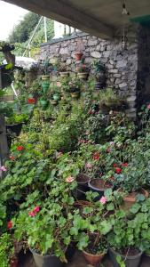 Duniya Flora & Holiday Home, Privatzimmer  Nuwara Eliya - big - 10