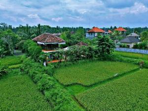 obrázek - White Villa Hostel Ubud