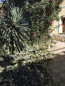 собственный дом, Hostels  Tbilisi City - big - 1