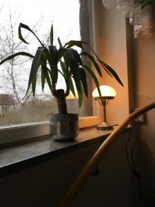 Hemse Vandrarhem, Hostels  Hemse - big - 28