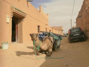 obrázek - Riad Activity Arg