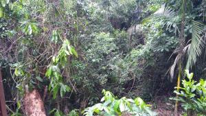 Casa do Bambu Amarelo, Проживание в семье  Парати - big - 2