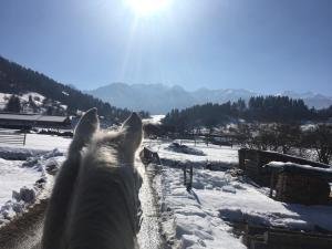 obrázek - Ranch Bohinj