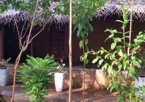 Mereiyans vil Eco Cottage, Vily  Wawinna - big - 26