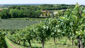 Tenuta Le Sorgive Agriturismo, Bauernhöfe  Solferino - big - 28