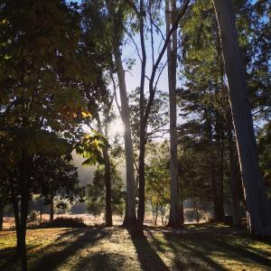Bright Cabin Park