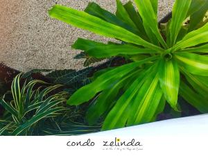 condo zelinda, Appartamenti  Playa del Carmen - big - 6