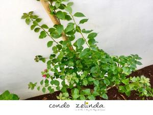 condo zelinda, Appartamenti  Playa del Carmen - big - 4