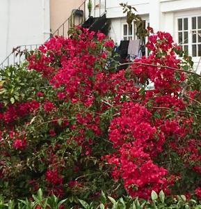 Flores, Ferienwohnungen  Lissabon - big - 8