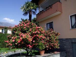 Apartment Casa Thuja - Ascona
