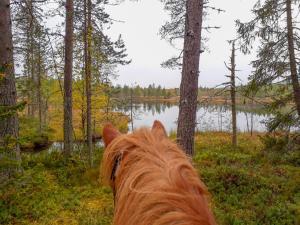 Villa Raatteenranta, Vily  Kuusamo - big - 4