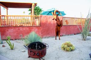 Studio Desert Rose Casita, Holiday homes  Borrego Springs - big - 9