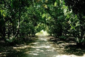 The Brook Ville, Resort  Sasan Gir - big - 19