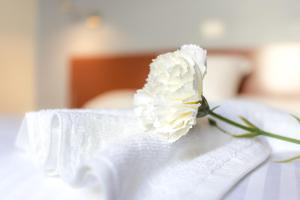 Hotel Blanca Paloma, Отели  Лас-Пальмас-де-Гран-Канария - big - 12