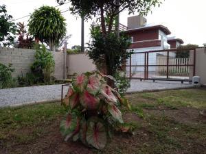 Casa da Vovó no Campeche, Dovolenkové domy  Florianópolis - big - 16