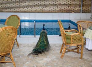 Hotel Raddus Jss, Отели  Ташкент - big - 21