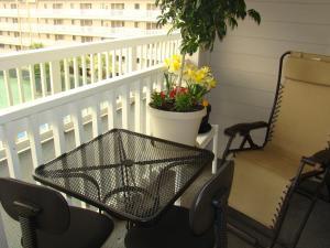 obrázek - Hilton Head Resort
