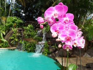 Paradise Pool Home, Ferienhäuser  Princeville - big - 8