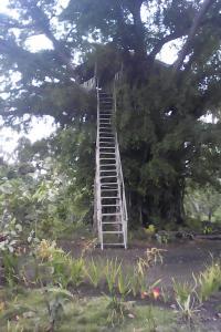 Volcano Horizon Tree House