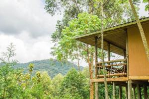 Ichumbi Gorilla Lodge, Chaty v prírode  Kisoro - big - 55