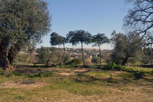 obrázek - Villa Tessi