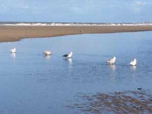 obrázek - Maribo aan zee